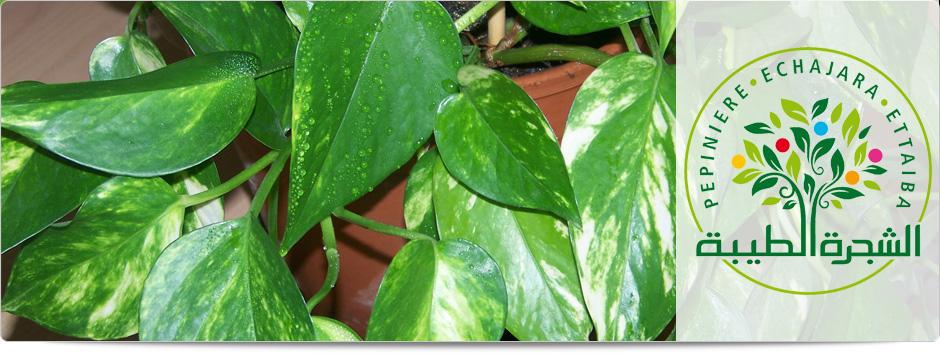 Vente par correspondance des plants d 39 agrumes plantes d for Plantes par correspondance